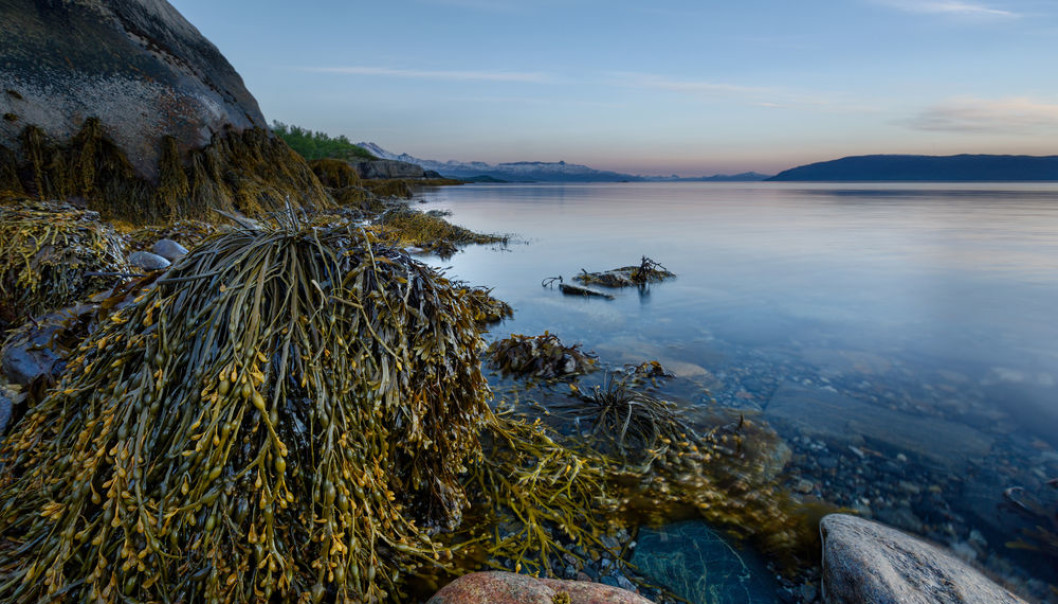 How Nordic Marine Forests Can Help Fight Climate Change